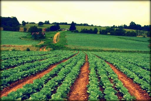 farm-2013-0022.jpg